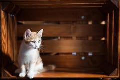Animales domésticos en casa Foto de archivo