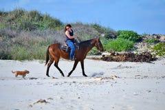 Animales domésticos en la playa Imágenes de archivo libres de regalías