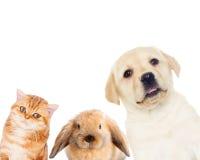 Animales domésticos fijados imagen de archivo