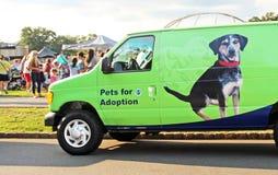 Animales domésticos para la adopción Fotografía de archivo