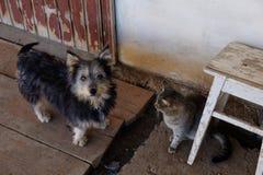 Animales domésticos, perro y gato en el pórtico perro y gato que cuelgan hacia fuera junto en el pórtico, foco bajo en perro fotos de archivo libres de regalías