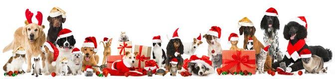 Animales domésticos de la Navidad Imagen de archivo libre de regalías