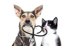 Animales domésticos y un estetoscopio Fotografía de archivo libre de regalías