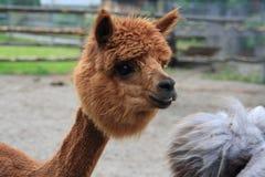 Animales en Alemania, año 2009 Imágenes de archivo libres de regalías