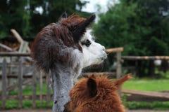Animales en Alemania, año 2009 Imagen de archivo