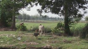 Animales en Camboya metrajes