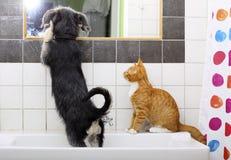 Animales en casa perro y gato que juegan junto en cuarto de baño Fotos de archivo libres de regalías