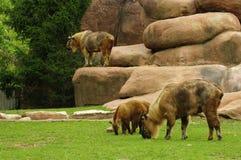 Animales en el parque zoológico de St. Louis Foto de archivo libre de regalías