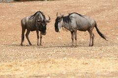 Animales en el salvaje Imagenes de archivo