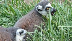 Animales en el salvaje Imágenes de archivo libres de regalías