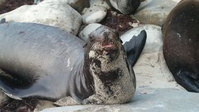 Animales en el salvaje Imagen de archivo libre de regalías