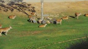 Animales en el salvaje fotografía de archivo libre de regalías
