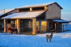 Animales en granja en invierno Fotos de archivo libres de regalías