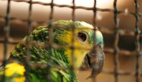 Animales en jaulas Imágenes de archivo libres de regalías