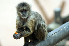 Animales en Jerez - España Fotos de archivo