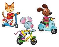 Animales en los vehículos. Fotos de archivo libres de regalías