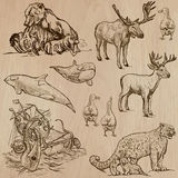 Animales en todo el mundo (parte 5) Paquete dibujado mano del vector Fotos de archivo libres de regalías
