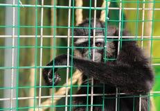 Animales en una jaula Fotografía de archivo libre de regalías