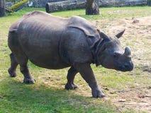 animales en verano en safari imágenes de archivo libres de regalías