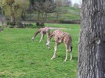 animales en verano en safari fotografía de archivo libre de regalías