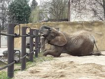 animales en verano en safari imagenes de archivo