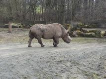 animales en verano en safari foto de archivo libre de regalías