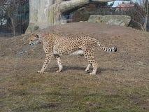 animales en verano en safari imagen de archivo