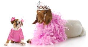 Animales estropeados Fotografía de archivo libre de regalías