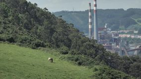 animales mezclados de trabajo y fabricación de la opinión de la fábrica del puerto 4K en el fondo de la naturaleza verde, almacen de video
