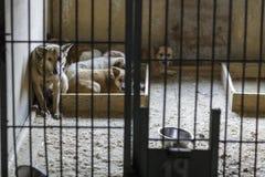 Animales perdidos en una jaula Imagenes de archivo