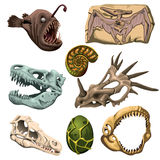 Animales, pescados y huevo fósiles antiguos Imágenes de archivo libres de regalías