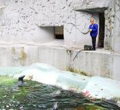 Animales que introducen de una mujer en el parque zoológico Foto de archivo