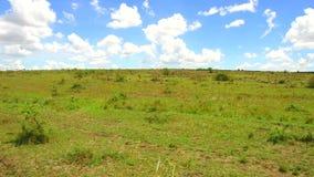 Animales que pastan en sabana en África almacen de metraje de vídeo