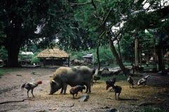 animales que vagan por libremente en la plaza principal del pueblo foto de archivo libre de regalías