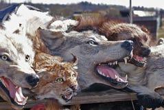 Animales rellenos Imagenes de archivo