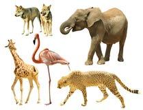 Animales salvajes Fotos de archivo