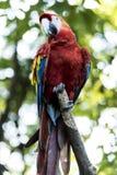 Animales salvajes foto de archivo libre de regalías