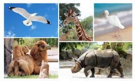 Animales salvajes de la vida del collage grande Foto de archivo