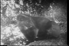 Animales salvajes del montaje en África almacen de video