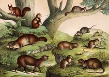 Animales salvajes en naturaleza Fotos de archivo libres de regalías
