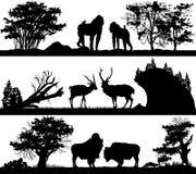 Animales salvajes (mono, ciervos, buey de almizcle) en diversos hábitats Fotos de archivo libres de regalías