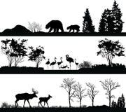Animales salvajes (oso, flamenco, ciervos) en diversos hábitats Imagenes de archivo