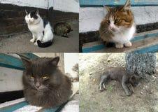 Animales sin hogar - gatos Imágenes de archivo libres de regalías