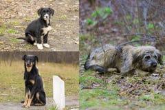 Animales sin hogar lanzados hacia fuera sobre la calle Foto de archivo libre de regalías