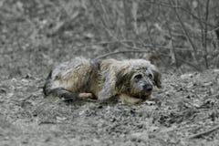 Animales sin hogar lanzados hacia fuera sobre la calle Imagen de archivo libre de regalías