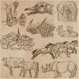 Animales - un paquete dibujado mano del vector, colección Imagenes de archivo
