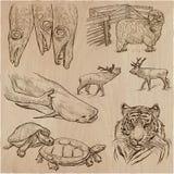 Animales - un paquete dibujado mano del vector, colección Imagen de archivo libre de regalías