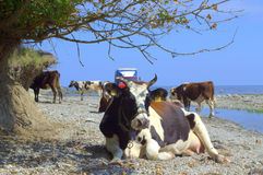 Animales vacationing de la playa del verano Fotografía de archivo libre de regalías