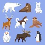 Animales y pájaros al norte árticos o antárticos Colección plana del vector ilustración del vector