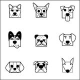 AnimalFaceBox02_Dog_session 免版税库存照片